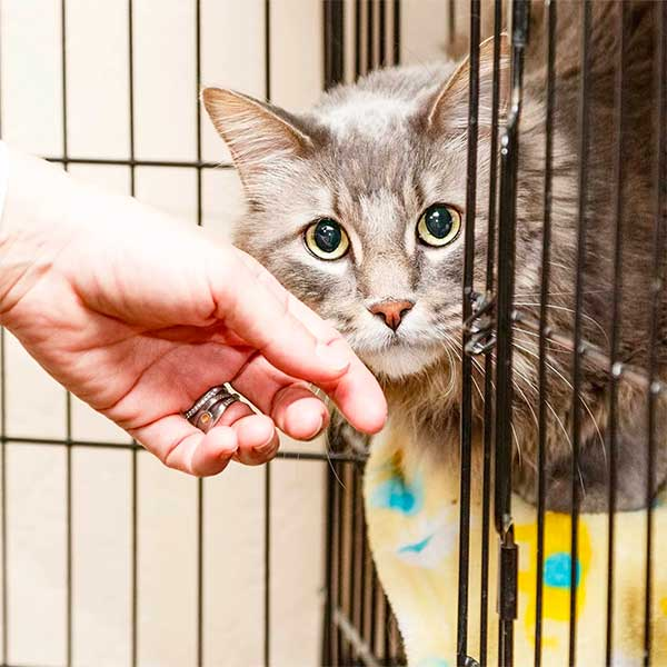 Help Overwhelmed Animal Shelters Affected By Coronavirus